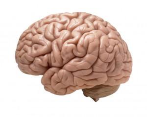 human-brain-thinking