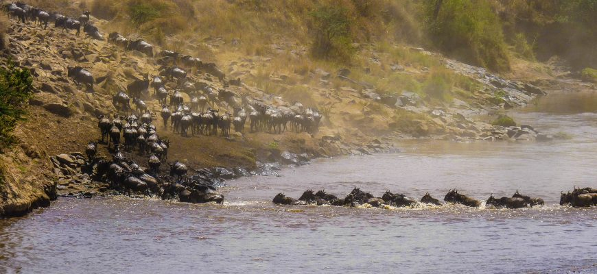 Wildebeest migration | WordPress site migration