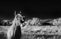 Win Horse