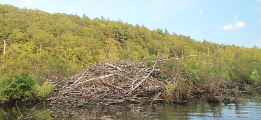 beaver dam beaver builder review